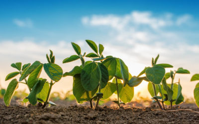 $45M Series B From Top Tier Investors Prompts Launch of Next-Gen Crop Protection Solutions Developer Enko Chem